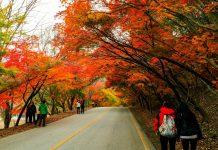 Du lịch Hàn Quốc mùa thu - Ngỡ ngàng trước vẻ đẹp