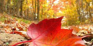 Đâu là nơi ngắm lá phong đỏ đẹp nhất trong kỳ nghĩ dưỡng của bạn?
